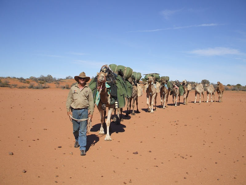 Australian Camels Safaris, Almerta Station, Yanyarrie Via Carrieton, Flinders Ranges, South Australia, 5432, Australia